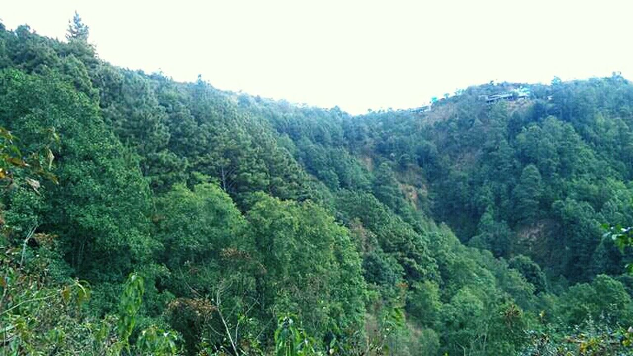 nature, tree, lush foliage, green color, forest, beauty in nature, no people, growth, scenics, tranquil scene, day, mountain, outdoors, landscape, tranquility, plant, clear sky, sky, tea crop