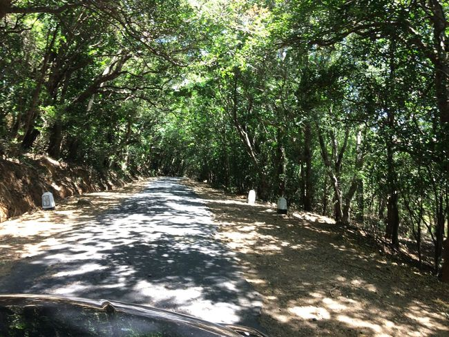 Way to riverston Beauty In Nature Deep Jungle Dry Forest Forest Jungle Jungle Life Narrow Nature Nature Non-urban Scene Outdoors Rain Forest Plants Rain Forest River Road Though Forest Shadow The Way Forward Tourism Tree