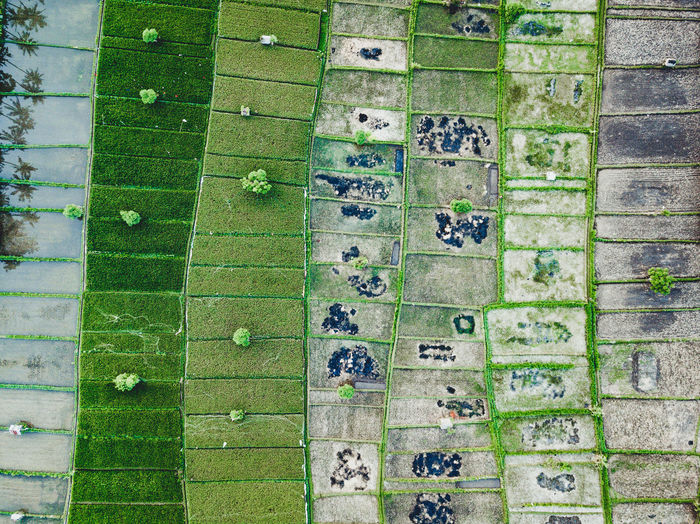RiceTerraces Square Architecture Backgrounds Built Structure Close-up Day Directly Above Full Frame Green Green Color Greenfields Growth High Angle View In A Row Nature No People Number Outdoors Pattern Plant Rice Field View From Above Wall Wall - Building Feature