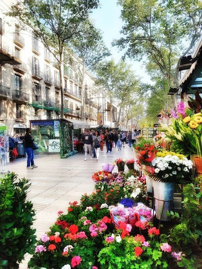 Les Rambles de Barcelona. Flower Multi Colored Real People Close-up Outdoors Best EyeEm Shot EyeEm Best Shots Streetphotography Barcelona Travel Destinations TheWeekOnEyeEM Larambla Colorful Street Street Photography City Citylife Cityscape The Secret Spaces