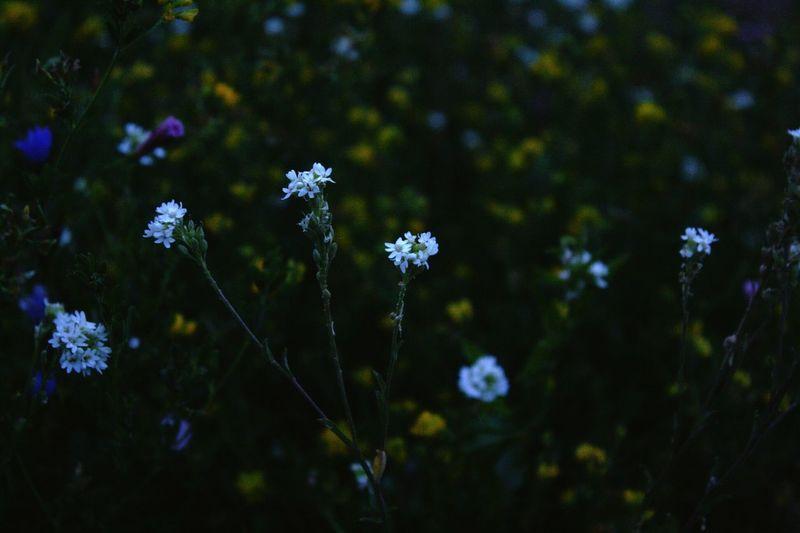 Hi! Flowers Open Edit Hello World