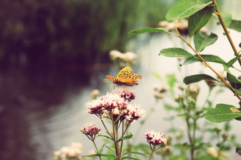 A nice butterfly! Outdoors Flower Nature Butterfly Flower Head Animal One Animal Nature Close-up Plant Part Insect