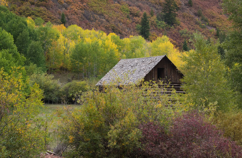 Sep 2018 - Old Farmstead at Sylvan Lake, Colorado USA 19th Century Buildings Architecture Autumn Beauty In Nature Building Building Exterior Built Structure Change Day Forest Green Color Growth House Land Landscape Nature No People Outdoors Plant Purple Color Scenics - Nature Tree Yellow Color
