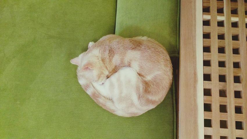 貓咪睡覺 喵星人 喵 Catoftheday 貓 Domestic Cat Heart Lovelovelove Love