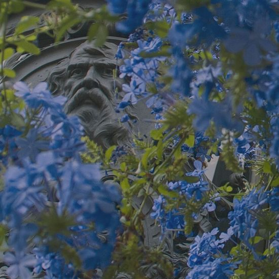 Nature Outdoors Beauty In Nature Close-up Argentina Argentina Photography History Recoleta Cemetery