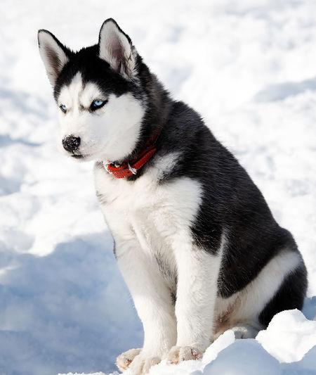 Portrait of dog sitting on snow