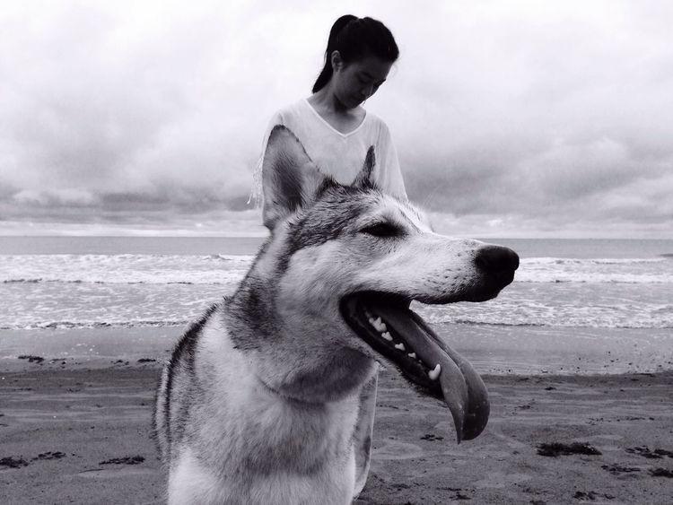 Husky ♡ Husky Husky Love Huskies IPhoneography B&w The Week On Eyem Pet Portraits