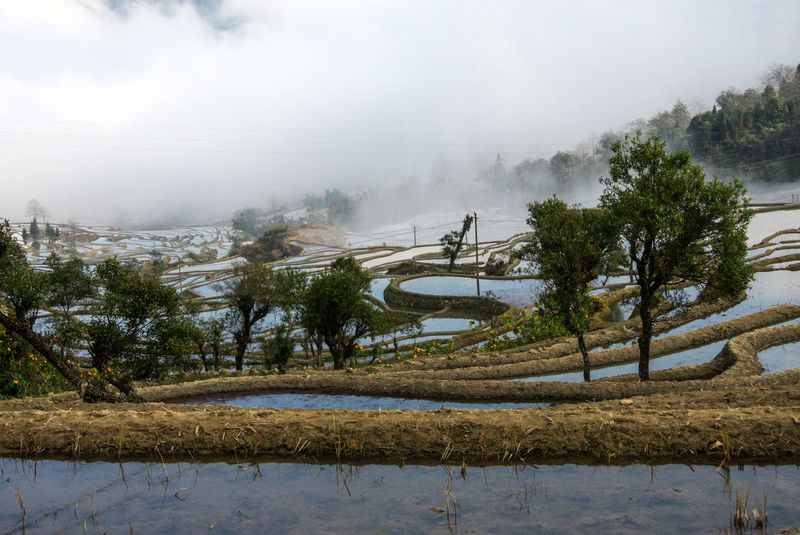 Day Fog Landscape Nature No People Outdoors Reflection Reflections Rice Rice Field Rice Fields  Rice Paddy Rice Terrace Rice Terraces Sky Tree Water Weather Winter Yuanyang Yuanyang Terraced Fields