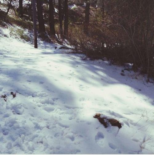 Wrightwood Mt. High??❄️ First Eyeem Photo