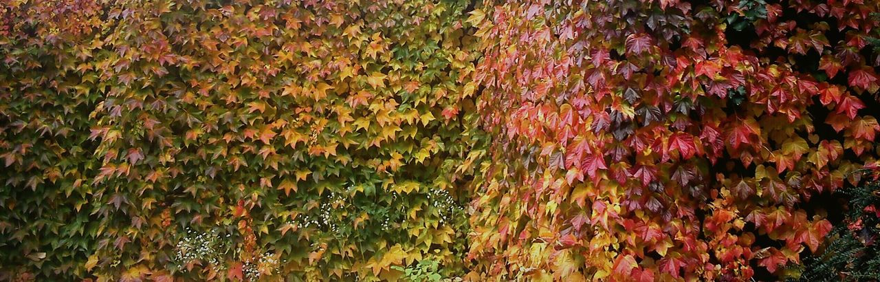 Leaves Autumn Autumn Colors Autumn Leaves Colors Colors Of Nature Nature Slovakia Wall Walk