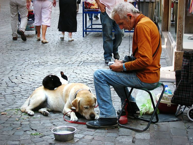 Every Picture Tells A Story Homeless Man Dog Sleeping  Rabbit Street Life Untold Stories Urban Life Street Portrait Streetphotography Street Photography