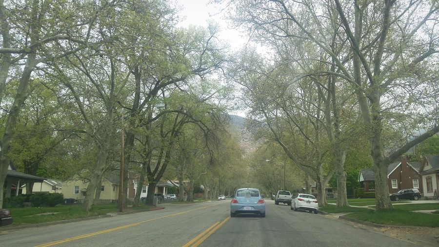 Beautiful East Ogden Imagination Reflecting Choices
