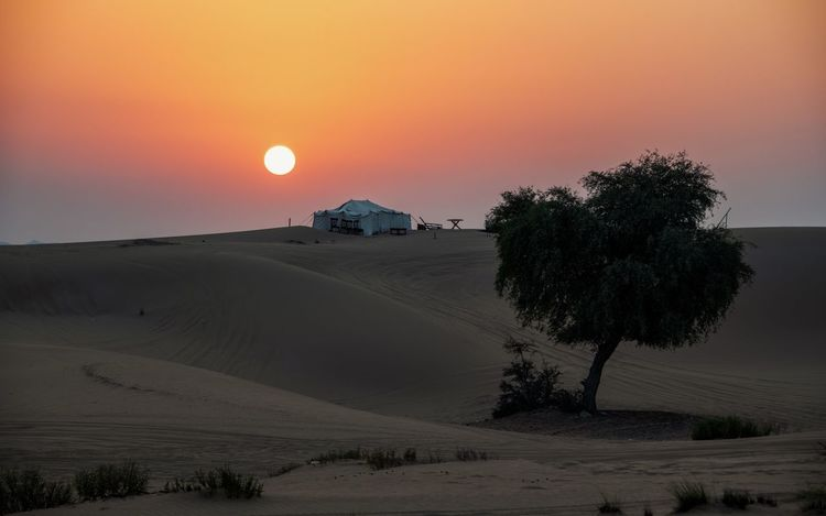 Orange Color Arid Climate Climate Landscape Plant Tree Sun Land Outdoors Desert Sand Sand Dune Tent Sun Over The Horizon Sunset Sunset In Desert
