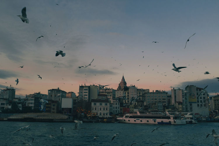 Architecture Building Exterior Sky Built Structure Bird Animal Themes Animals In The Wild Vertebrate Animal Flying Water Large Group Of Animals Animal Wildlife City Building Nature Flock Of Birds Sunset No People Outdoors Cityscape Galata Tower Istanbul Karaköy Sea Gull