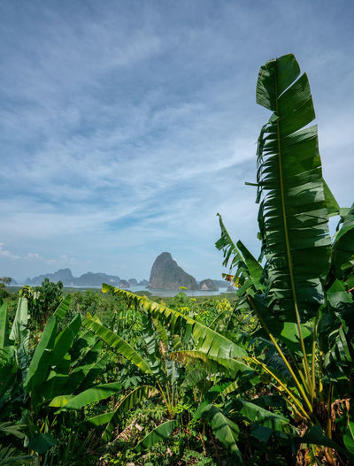Green Color Leaf Growth Sky Plant Part Nature Beauty In Nature Plant Cloud - Sky No People Day Tranquility Banana Tree Scenics - Nature Banana Tranquil Scene Land Landscape Mountain Outdoors Leaves