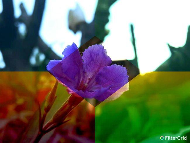 Flores Flowers,Plants & Garden