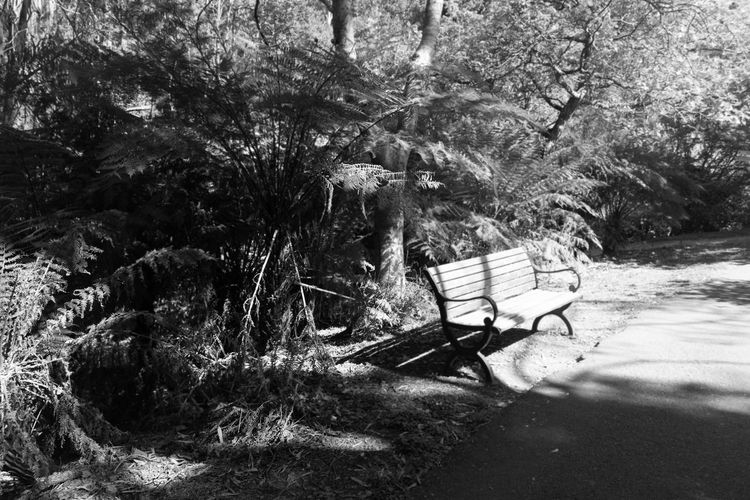 Tree Seat Bench Plant Absence Nature Day No People Empty Tranquility Park Land Forest Beauty In Nature Outdoors Relaxation Chair Growth Tree Trunk Tranquil Scene Park Bench Blackandwhite Black & White Shadow Shadows & Lights