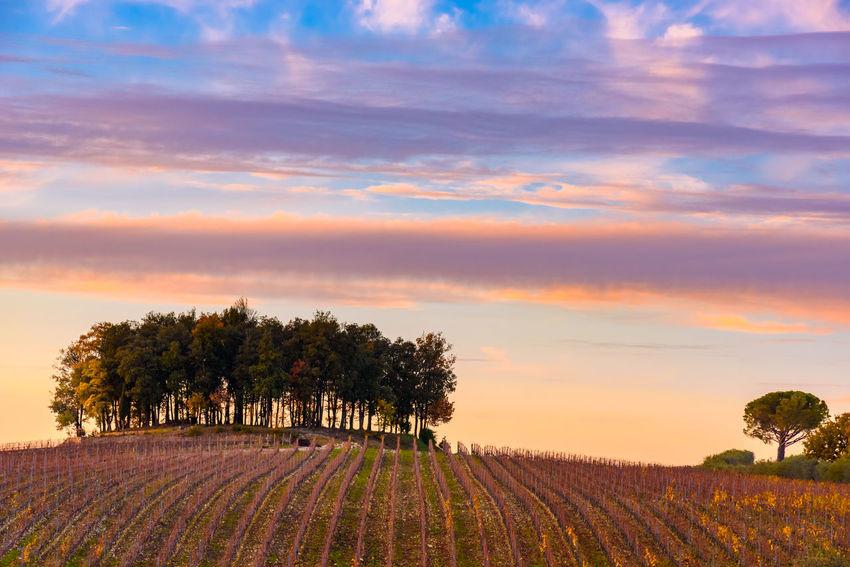 Crete Senesi Rural Torre A Castello Trees Tuscany Winter Chianti Clouds Countryside Italian Landscape Sky Sunset Vineyard