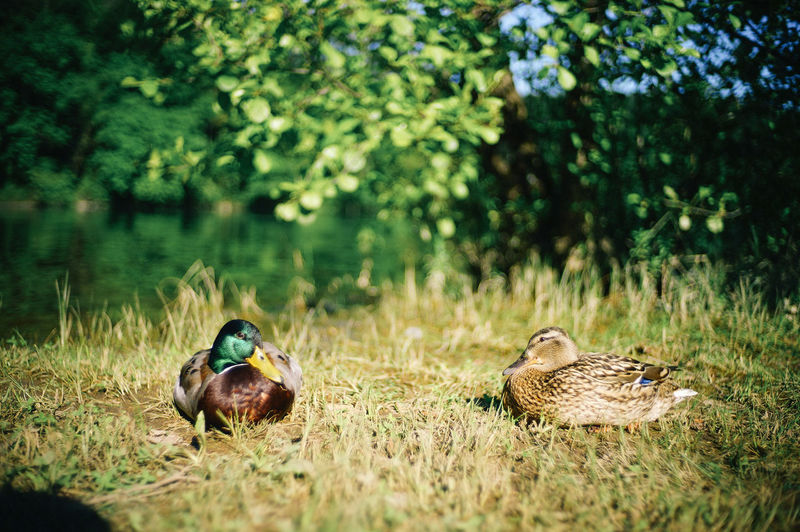 Ducks in the forest, Croatia National Park Plant Animal Animal Themes Animal Wildlife Animals In The Wild Grass Tree Nature Group Of Animals Selective Focus Vertebrate Day Green Color Land No People Outdoors Bird Forest Growth Duck
