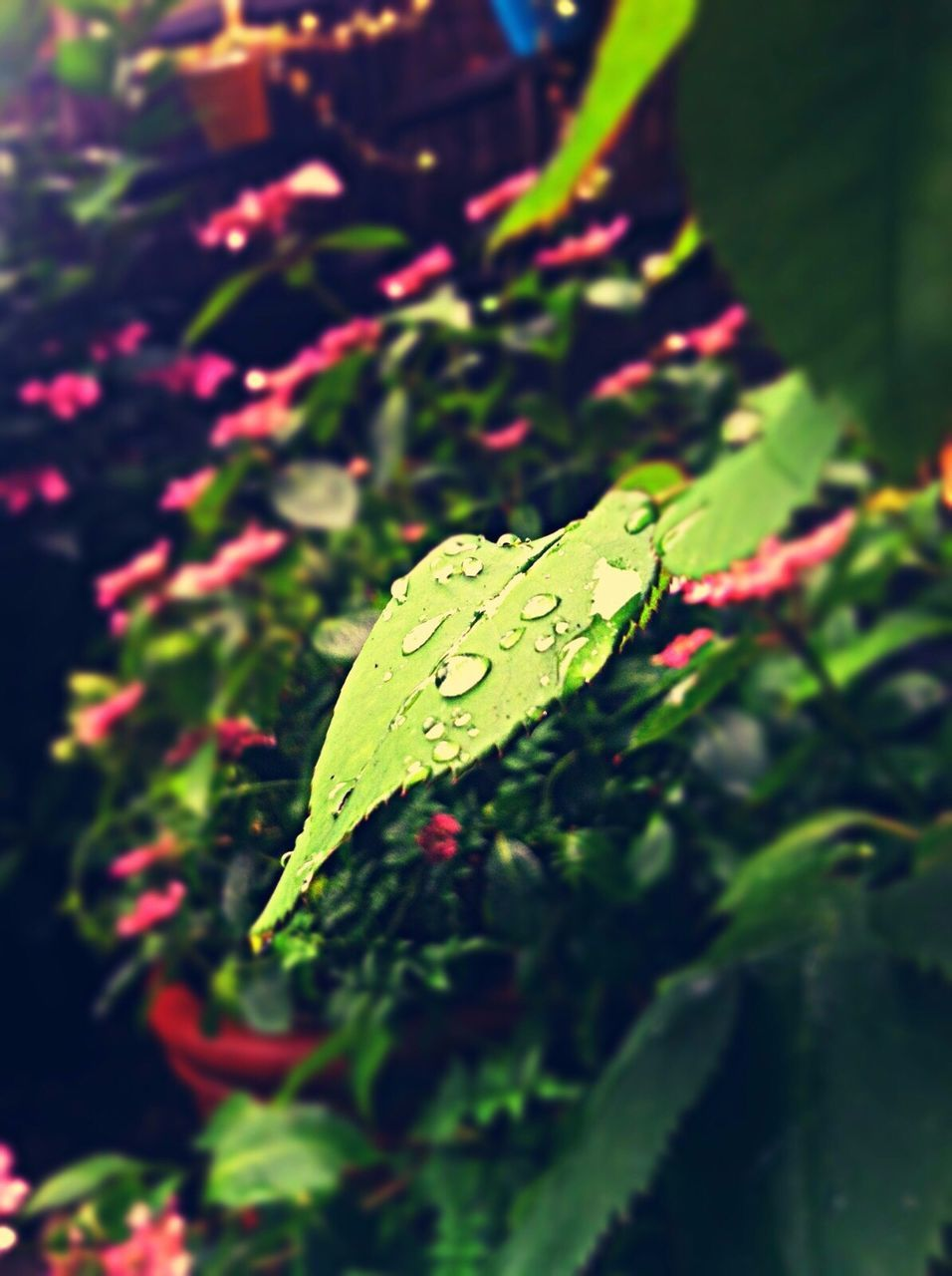 leaf, green color, change, nature, outdoors, close-up, day, autumn, no people, growth, maple