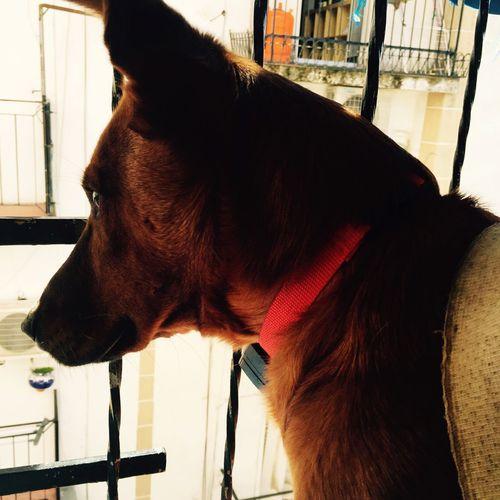 Domestic Animals Pets Dog Animal First Eyeem Photo