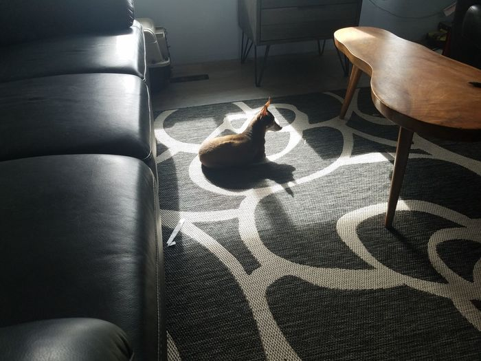 High angle view of cat relaxing on floor at home