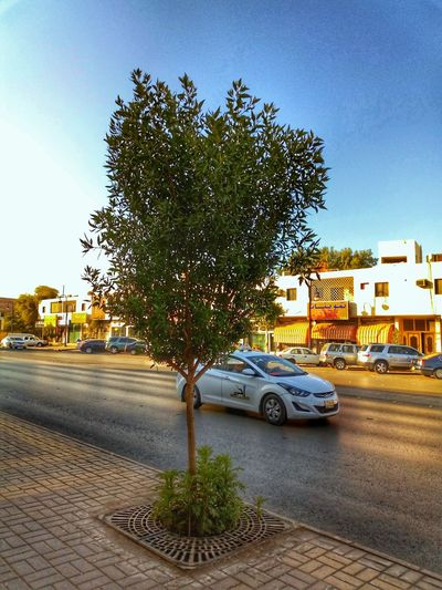 Car Transportation Tree Land Vehicle Street Mode Of Transport Stationary
