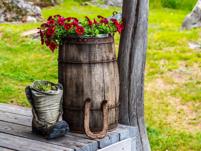 Close-up of potted plant in wooden post