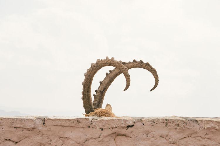 Deer Horns VSCO Eyem Best Shots