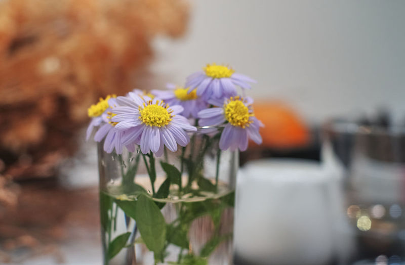 Close-up of purple flowering plant on glass table