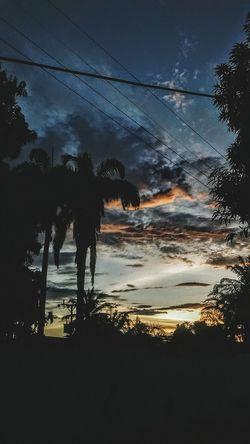 Palm Tree EyeEmNewHere