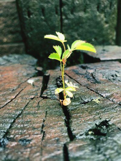 Plant Nature No