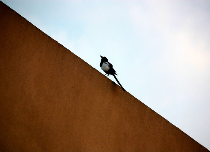 Low angle view of bird perching on roof. view from my balcony.