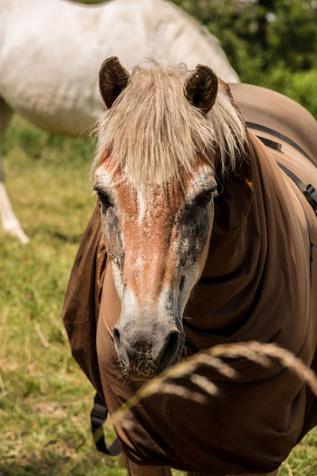 Horses on the green meadow Animal Animal Body Part Animal Head  Animal Themes Animal Wildlife Day Domestic Domestic Animals Field Focus On Foreground Grass Herbivorous Horse Land Livestock Mammal Nature No People One Animal Outdoors Pets Vertebrate