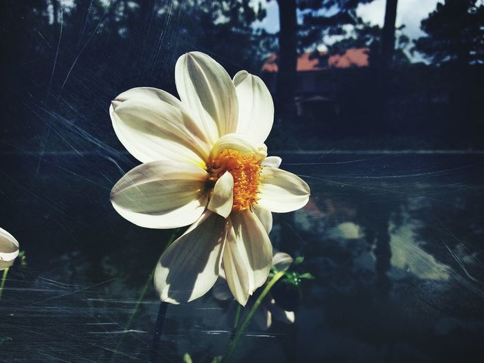 This flower said, Hi!. Baguio, Mar 2015. Oh Hai Dere Flower Collection Eyeem Philippines