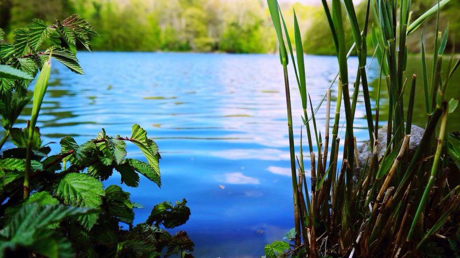 Lac et La Hulpe