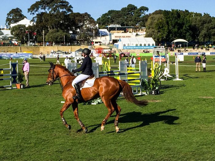 Equestrian Lifestyle Chestnut Brown Horse Domestic Animals Competitive Sport Person Animal Themes Event Sport Perth September 25, 2016 Western Australia Royal Show Horse Riding Competition Showjumping Rider Hurdles Equestrian Riding Australia Showgrounds Claremont Lifestyles Equine