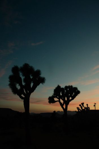 Silhouette trees on landscape at sunset