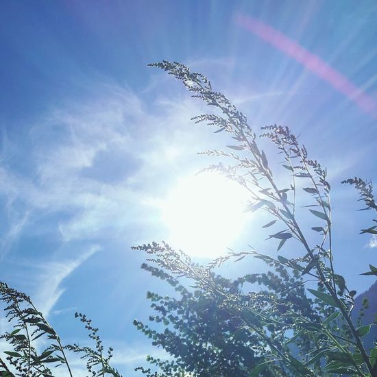 Low Angle View Sky Sunbeam No People Day Nature Sunlight Outdoors Growth Tree Beauty In Nature