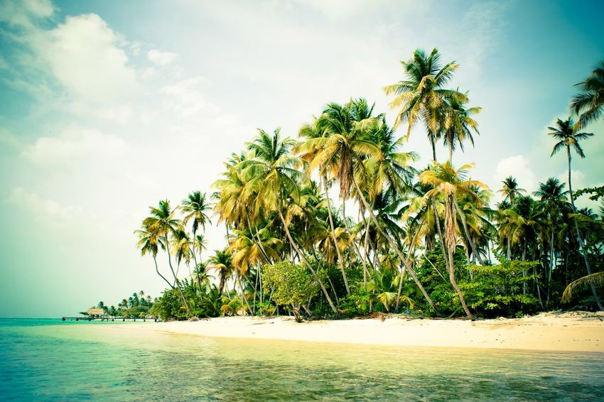 Tropical beach with palm trees waving in the sun Exotic Summer Tree Plant Water Sky Beauty In Nature Beach Tropical Climate Cloud - Sky Scenics - Nature Tranquility Palm Tree Land Tranquil Scene Idyllic Sea Nature Growth Day Outdoors No People