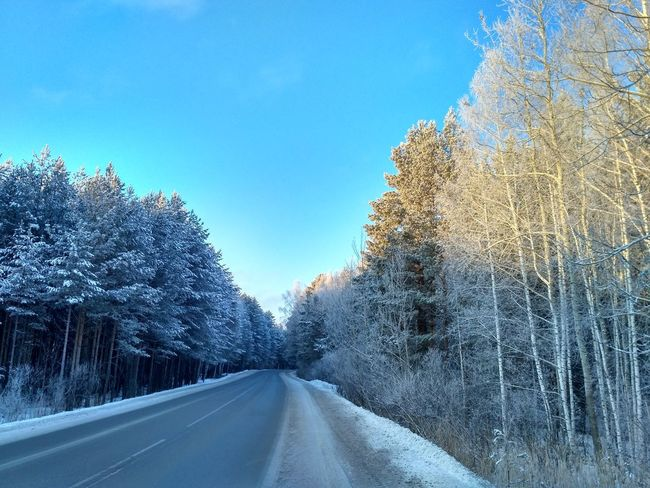 Winter road Road The Way Forward Transportation Winter Car Tree No People Snow Nature Cold Temperature Winter Forest Cold Winter Snow Frozen Weather Nature Road Cold Days Winter Is Coming Shades Of Winter Beauty In Nature Landscape Pine Tree Tree