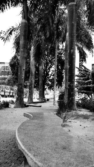 SP Blac&white  Tree Brasil