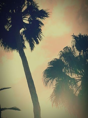 Vegas Baby Palm Trees Natural Beauty Summervibes Beautiful