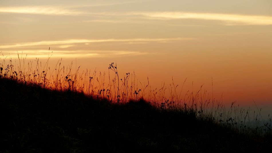 Sunset Silhouettes Silhouette Grasses Light Reflections Creative Light And Shadow Landscapes Creative Light Coloursplash Evening Sunset Sunset #sun #clouds #skylovers #sky #nature #beautifulinnature #naturalbeauty #photography #landscape Colour & Light