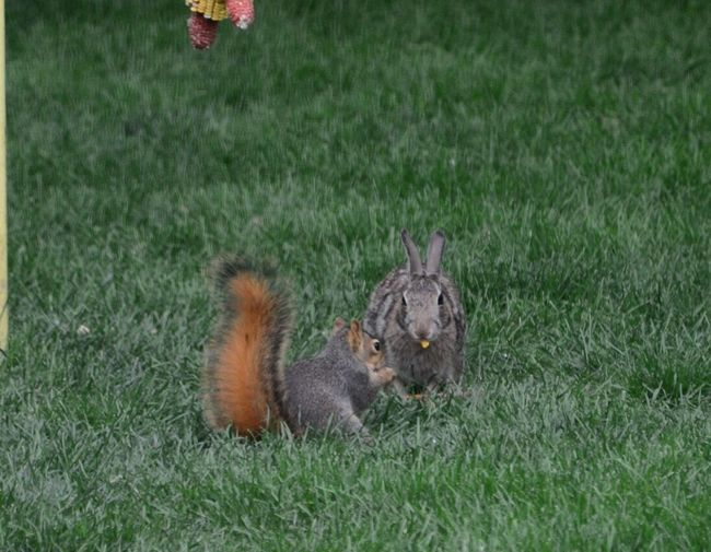 Bunny And Squirrel Sharing  Grass Field Animal Themes Animals In The Wild mammals Day Outdoors Nature One Animal No People Growth