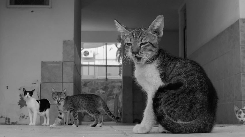 Street Photography Animal Themes Mammal Animal Vertebrate Group Of Animals Cat Domestic Cat Domestic Animals Pets Domestic Feline No People Built Structure Building Exterior Architecture Outdoors