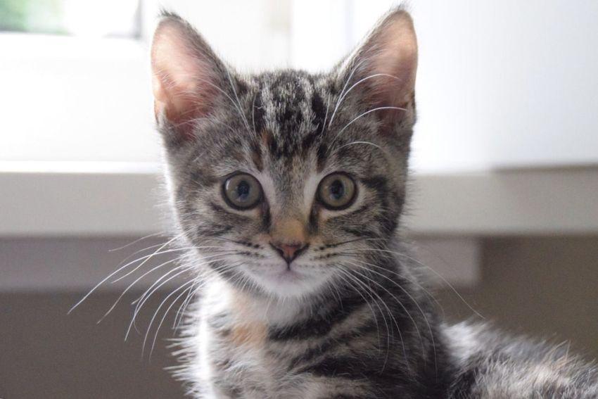 Little Kitten Kitten Kitty Pets Cats Cat Lovers Adorable Cute