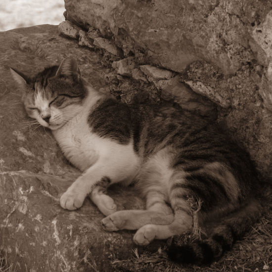 Cat Domestic Animals Domestic Cat Having A Nap One Animal Pets Relaxation Relaxing