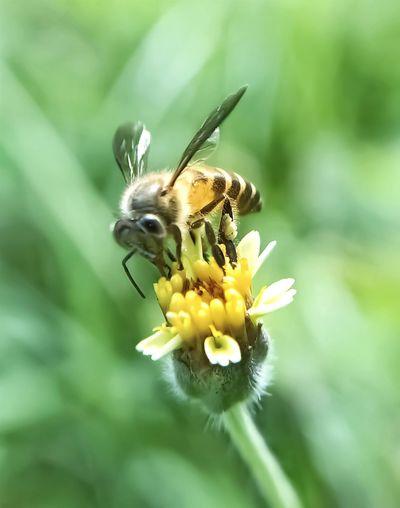 hunt for nectar