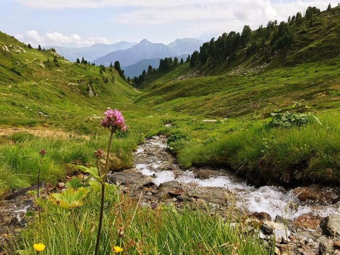 Clover Alps Flowing Water Creek Nature Beauty In Nature Mountain Tranquil Scene Landscape Outdoors Scenics Tranquility Green Color No People Wilderness Grass Day Mountain Range Adventure